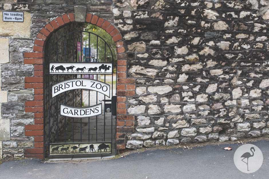 Bristol-zoo-wedding-photography-20