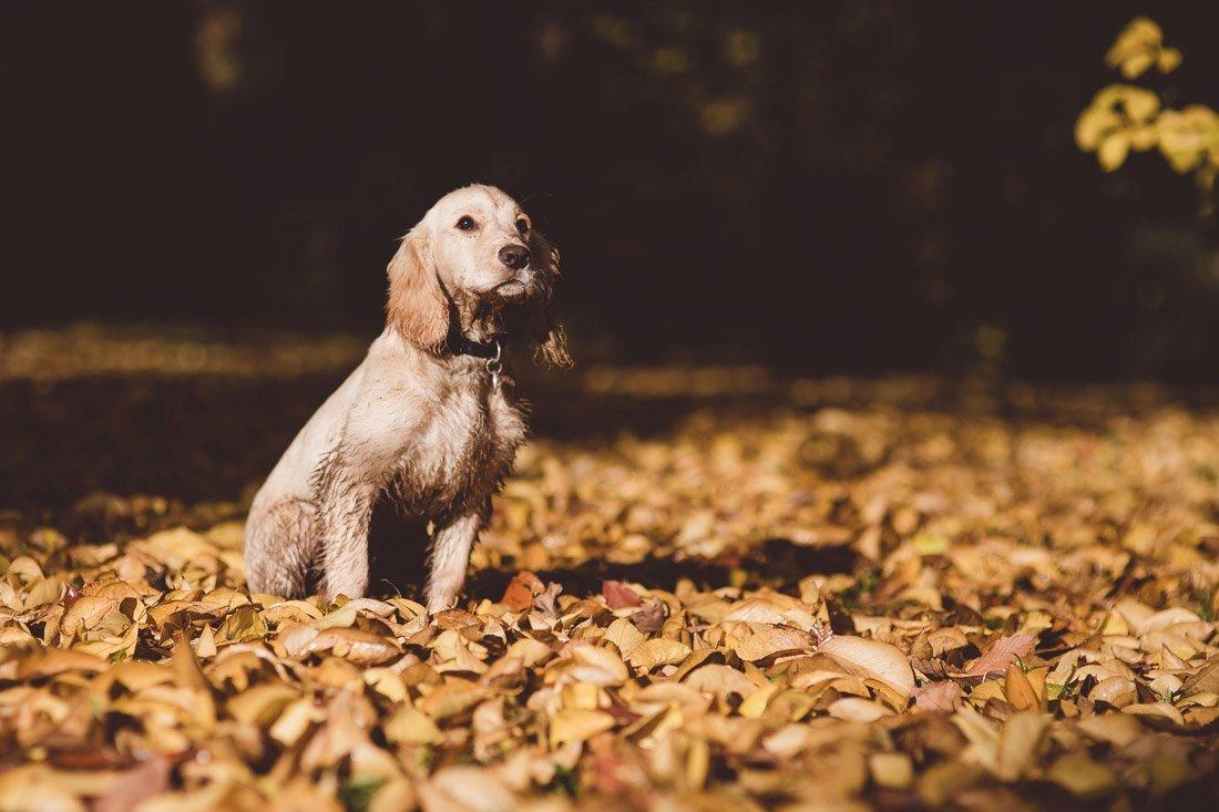 Westonbirt Arboretum Photo Shoot Dog