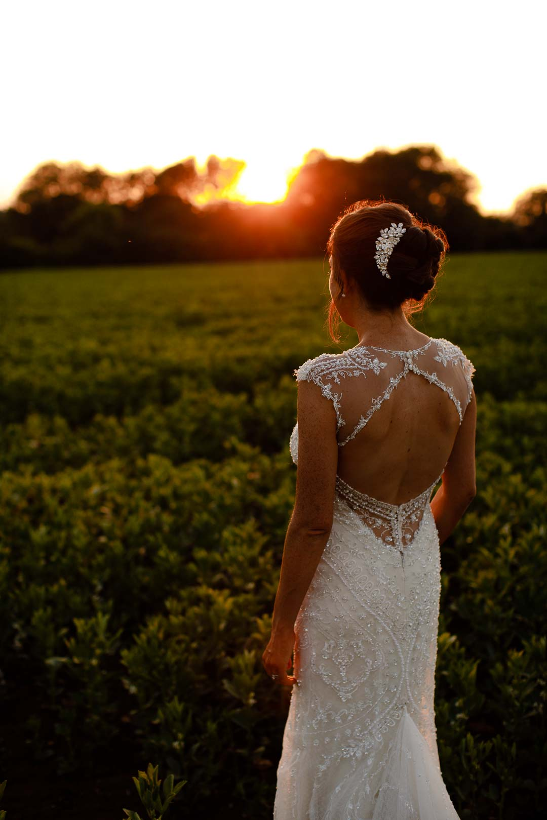 walking through the sunset fields